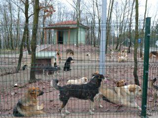 Hayvan Barınak Çiti Adana